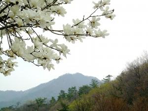 горы кореи